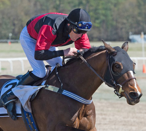 DIPLOMAT winner of the 2015 Carolina Cup Ridden by Bernard Dalton Trained by Jimmy Dat Owned by Daybreak Stables Wining time 4:06 4/5